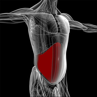 腹筋は、表層の腹直筋・中層の腹斜筋・深層の腹横筋の3層構造になっています