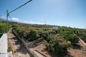 Blick über die Felder von der Dachterrasse