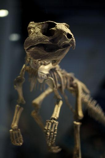 Dinosauriersafari - Skelett Dinosaurierer