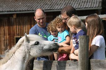 Spielend den Umgang mit Tieren lernen