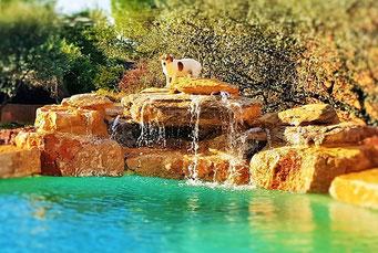 chien-sur-cascade-piscine