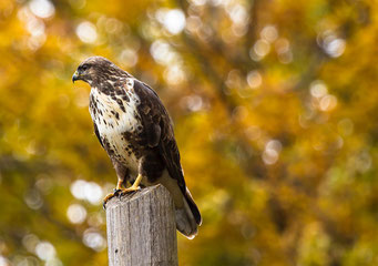 Falke - Foto von Alessandro La Becca