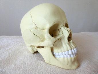 #Totenkopf #physiosusanne #physiotherapie #physiotherapeut #neusiedlamsee