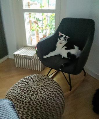 Mit Tieren sprechen - Behandlungsraum