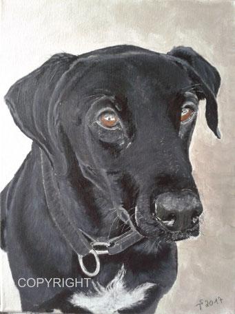 Hundeporträt: Kopf und Teil des Körpers von schwarzem Labradormischling mit weißer Blesse an der Brust. Hund schaut Betrachter mit braunen Augen an, Tiermalerei, gemalte Tierportraits nach Fotovorlage, Tiere zeichnen lassen