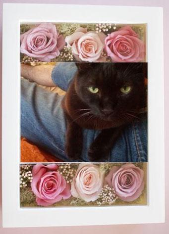 猫の名前は「すいか」ちゃん。16歳。
