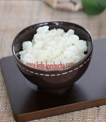 Fresh Milk Kefir Grains