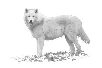 Ausflugstipp der Familie Barth: Wolfspark Merzig