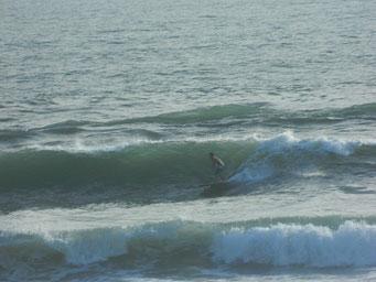 潮が引くにつれてサイズアップしていました。