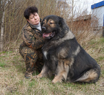 кавказская овчарка торик из светлого дома