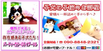 子犬と子猫のお部屋(iタウンページ )