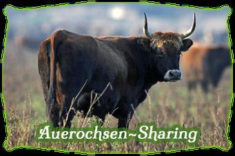 Mein BioRind | Auerochsen-Sharing