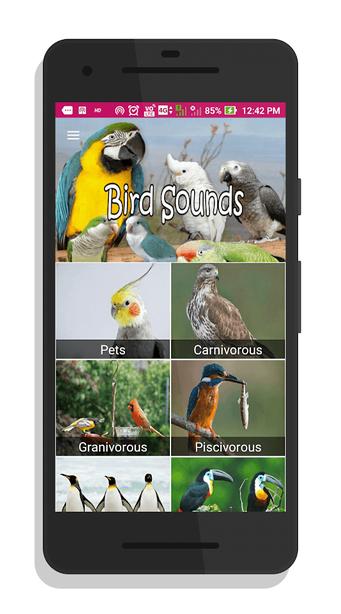100 sonidos de aves exoticas