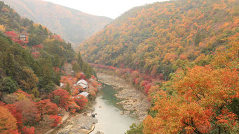 紅葉に色づく保津峡(京都市右京区 亀山公園)