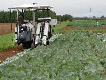 収穫をおこなうロボット