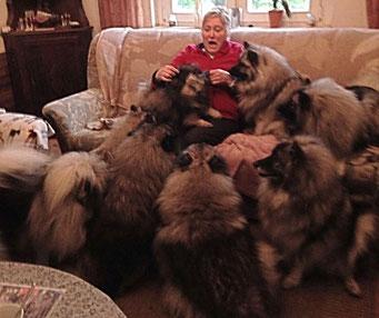 Wolfsspitze von der Römerroute Keeshond Loup