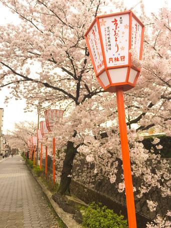京おどりの灯篭
