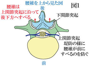 腰椎後方すべりと上関節突起