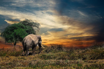 Ein Elefant geht bei einem Baum vorbei.