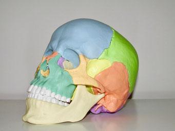 Osteopathie Berlin Steglitz - Praxis Jaron