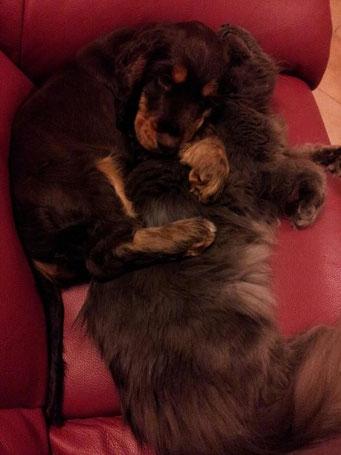 """Un mio cucciolo con il suo """"amico"""" gatto."""