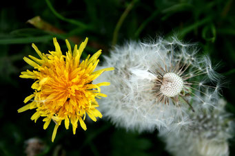 pixabay autumn-917735_1920
