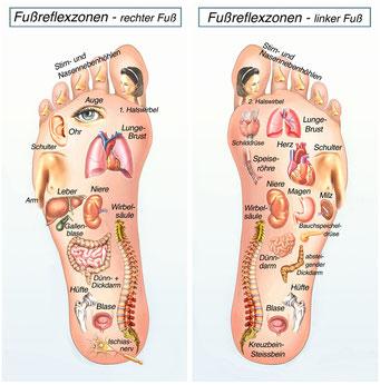 Fußreflexzonen Abbildung, rechter und linker Fuß. Der Akupressurpunkt für den Bereich des Kopfes ist an den Zehen und der Unterleib an den Versen.