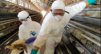 鳥インフルエンザ(2020/2021)