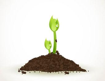 種は芽を出す