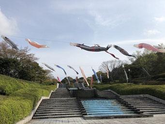 永源山公園の鯉のぼり