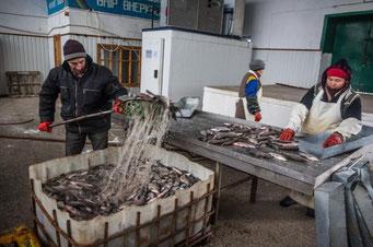 アラル海の漁師