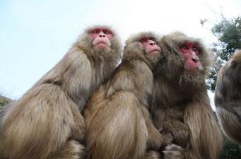 猿は寛容?
