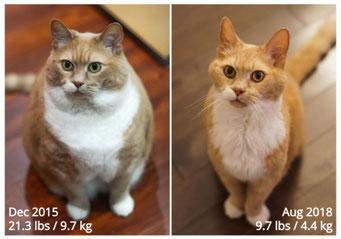 猫の減量は長寿につながる