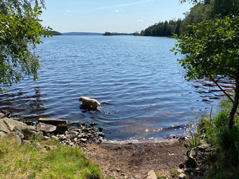 Hund im See Immeln Südschweden