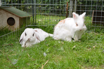 Kaninchenbetreuung, Kaninchen Hotel, Kaninchen Ferien