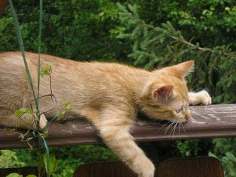 relaxte Katze
