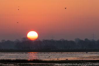 Sonnenaufgang über dem Ochsenmoorpolder