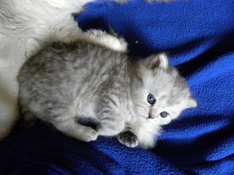 Sissys Mädchen (Alter: 3,5 Wochen)