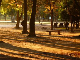 朝の運動公園