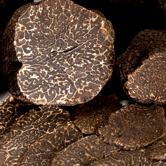 Truffe noire (Tuber melanosporum) - Touraine