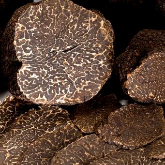 Truffe noire (Tuber melanosporum) - Touraine - Truffe Houette - Chinon