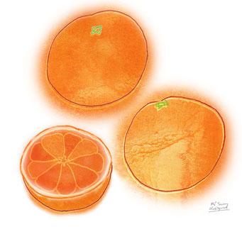 orange (2015.5)