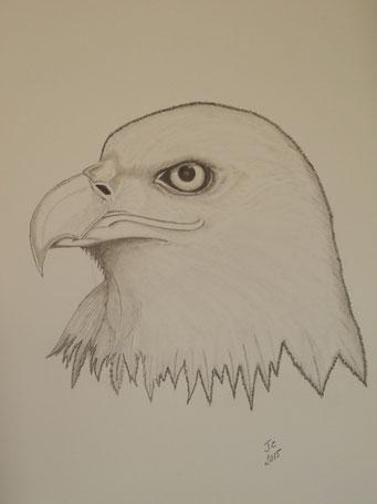 l' Aigle