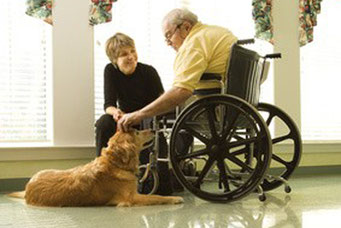Chien visiteur pour maison de retraite, école, hopital, intitue pour personnes handicapés