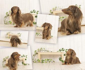 犬 記念写真