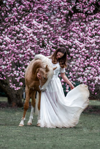 Magnolien Pferdebild