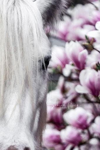 Nahaufname Pferd Magnolie