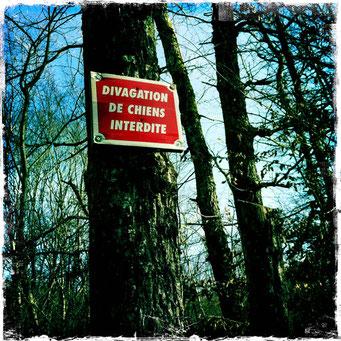 divagations poétiques dans la forêt