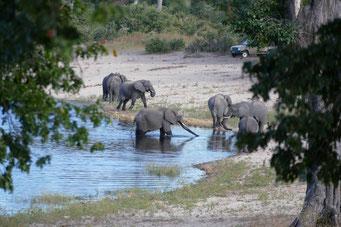 Elefanten am Horseshoe-Bend des Kwando