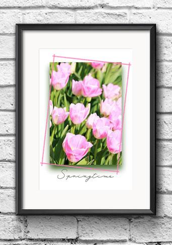 Poster Frühling Tulpen rosa
